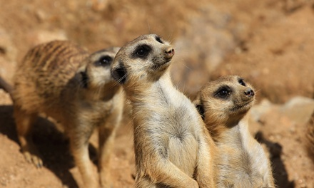 Meerkat Experience with Farm Entry for Two Adults or Two Adults and Two Children at Willow Tree Family Farm