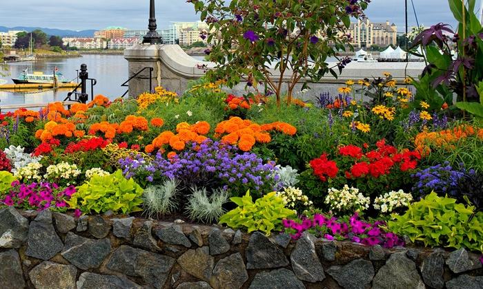 Delightful Rock Garden Flower Bulb Mix (55, 110, Or 220 Bulbs) ...