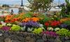 Pre-Order: Rock Garden Flower Bulb Mix (55, 110, or 220 Bulbs): Pre-Order: Rock Garden Flower Bulb Mix (55, 110, or 220 Bulbs)