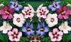 Hibiscus-planten
