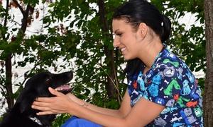 Ami pour la vie: Forfait toilettage et tonte ou pension pour chien chez Ami pour la vie (jusqu'à 57 % de rabais)