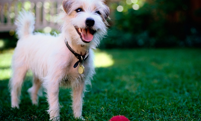 Jersey City Unleashed - The Waterfront: 5 or 20 Days of Dog Day Camp, or One Month of Unlimited Dog Day Camp at Jersey City Unleashed (Up to 65% Off)