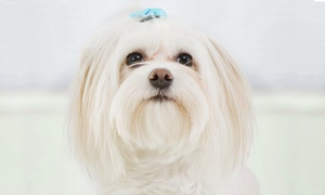 Adorable Animal Designs Salon: Three or Seven Nights of Boarding at Adorable Animal Designs Salon (50% Off). Eight Options Available.