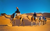 Sunrise or Morning Desert Safari for Up to Four with Net Tours and Travels (Up to 56% Off)