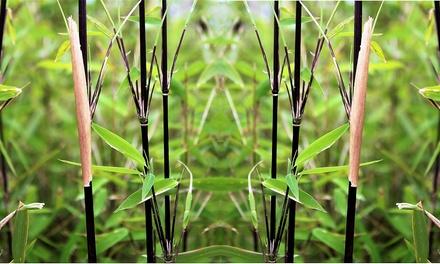 Set di 2 o 3 bambù 70 cm