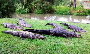 Alligator Alley: Gator-Ranch Visit with Feedings for Two or Four People at Alligator Alley (Up to 55% Off)