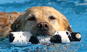 Up to 38% Off Dog Swims with Access to Indoor Park  at Doggy Paddle Aquatic Center for Dogs, plus 6.0% Cash Back from Ebates.