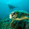 Up to 40% Off Snorkel Tours from Oahu Catamarans