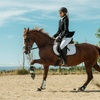 Up to 51% OffHorseback Riding Lessons
