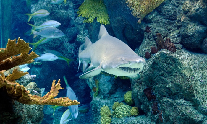 The Florida Aquarium - Downtown Tampa: Extended Fun Thursdays Admission for Two or Four at The Florida Aquarium (50% Off)