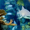 25% Off Dive with the Sharks Experience
