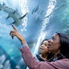 Up to 27% Off Attraction Pass at PIER 39