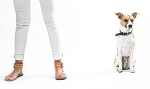 Feri Fotografie: Haustiershooting mit oder ohne Tierhalter inkl. 1 Foto als Ausdruck bei Feri Fotografie (bis zu 72% sparen*)
