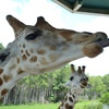 42% Off Admission to Lion Country Safari