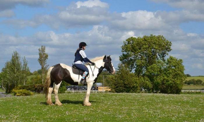 90 Minute Horse Riding Session Claremorris Equestrian