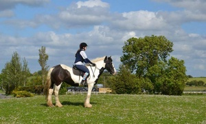 Claremorris Equestrian Centre: 90-Minute Horse Riding Session for One, Two or a Family of Four at Claremorris Equestrian Centre