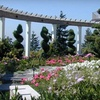 Half Off Plants and Pottery in Gig Harbor