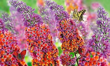 3, 6 ou 9 Arbre à papillons Flower Power