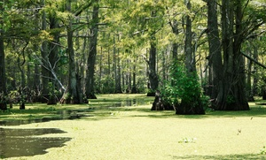 James & James Tours: Swamp Tour for Two or Four from James & James Tours (Up to 44% Off)