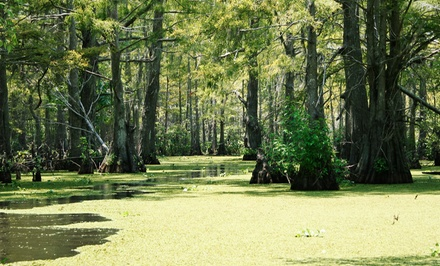 Swamp Tour for Two or Four from James & James Tours (Up to 44% Off)