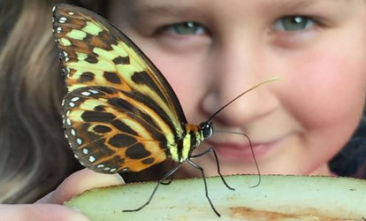 Single or Family Entry Full-Day Ticket to Stratford Butterfly Farm (Up to 44% Off)