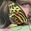 Butterfly Farm Full-Day Ticket: Child £4, Adult £5