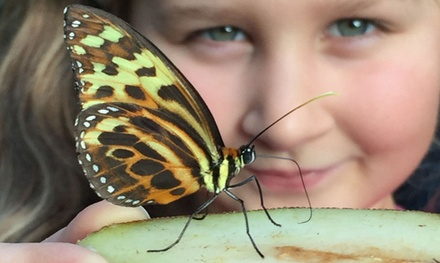 Single or Family Entry FullDay Ticket to Stratford Butterfly Farm