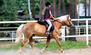 Sportowy Klub Jeździecki Jokar: Jazda konna: 2 jazdy indywidualne lub w grupie 2-6 osób za 69,99 zł i więcej opcji w Sportowym Klubie Jeździeckim Jokar