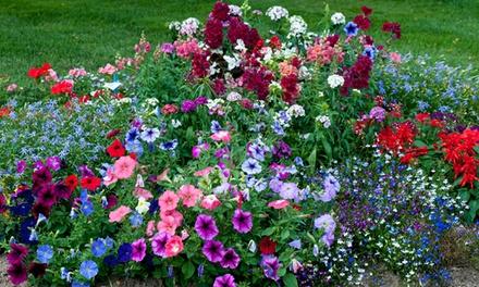 24, 48, 72 or 144 Garden Plug Plants