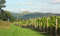 Vineyard Tour and Wine Tasting with a Glass of Mulled Wine and a Mince Pie for Up to Four at Kerry Vale Vineyard