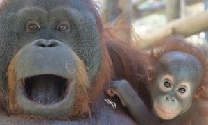 Zoo de Barcelona: ¡Últimos días! Entrada para 1 o 2 adultos con 1 o 2 niños o 2 adultos al Zoo de Barcelona desde 18,45 €