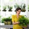 4 luftreinigende Farn-Pflanzen