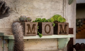 Pre-Order: MOM Reclaimed Garden Succulents (3-Piece)