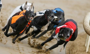 Love The Dogs: Greyhound Racing Entry for Up to Eight, Two Locations (Up to 75% Off)