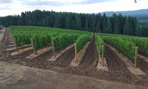 LaVelle Vineyards: $21 for Vineyard Tour and Wine Tasting for Up to Four at LaVelle Vineyards in Elmira ($85 Value)