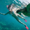 Tropical Fish and Turtle Snorkeling Tour (Up to 64% Off)