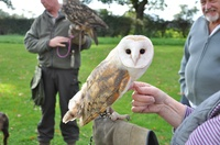 Birds of Prey Meet and Handle the Owls Experience and Talk for One or Two at Battlefield Falconry Centre (Up to 82% Off)