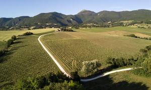 Azienda Agricola Bisci: Degustazione prodotti tipici e calici di vino per 2 o 4 persone all'Azienda Agricola Bisci (sconto fino a 59%)