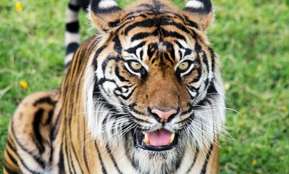Phoenix Zoo Deals in Phoenix AZ Groupon