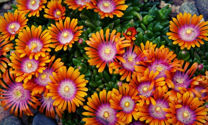 Tower Perennial Gardens - Spokane South: $10 for $20 Worth of Plants and Flowers at Tower Perennial Gardens