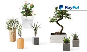 Evrgreen: Wertgutschein über 30, 60 oder 90 € anrechenbar auf Luftpflanzen, Sukkulenten, Hängesysteme und Bonsais bei Evrgreen