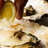 神奈川県/関内 ≪牡蠣など120分食べ放題+(焼き牡蠣3個or生牡蠣3個)≫