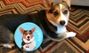 Up to 61% Off Custom Frisbee Toys from PrideBites