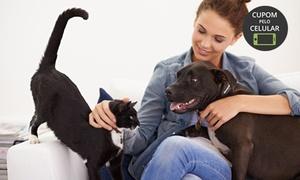 Estação Pets Interlagos: Estação Pets Interlagos - Jardim Ana Lucia: banho para gatos ou cães de pequeno, médio ou grande porte