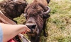 Up to 47% Off Tour at Cook's Bison Ranch