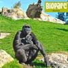 Entradas a Bioparc Valencia
