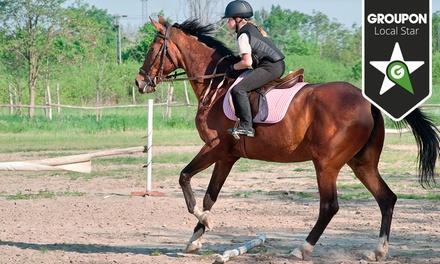 Lusitanos Academy — Sintra: 1 ou 3 meses de aulas de equitação desde 34€