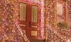 100 LED Solar-Powered Multi Color Fairy String Lights: 100 LED Solar-Powered Multi Color Fairy String Lights