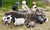Trendy Garden Animals Ornaments