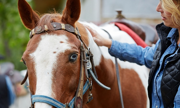 Douglas Lakeview Stables - Mcmillan: One Horseback Trail Ride for Two or Four at Douglas Lakeview Stables (Up to 61% Off)